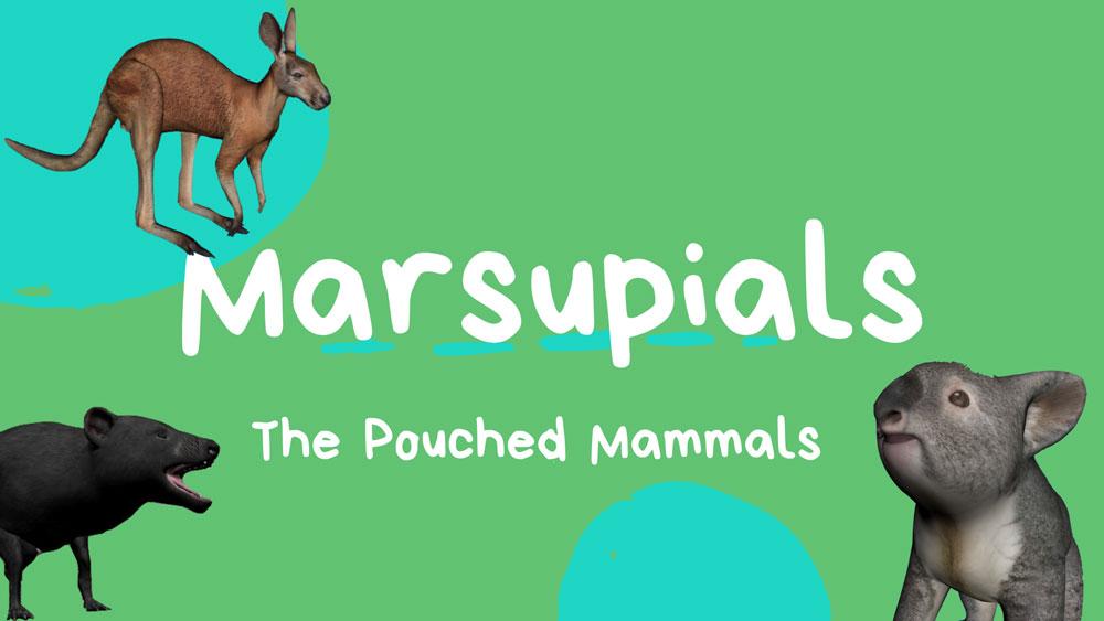 Marsupials_Banner